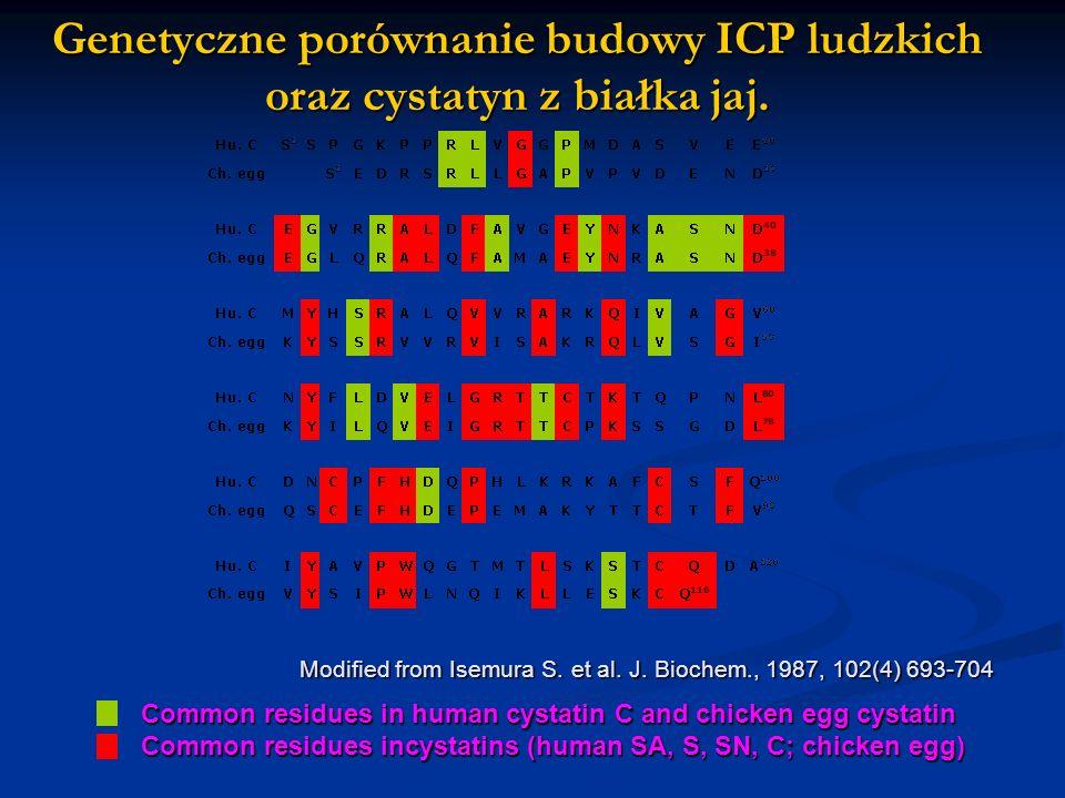 Genetyczne porównanie budowy ICP ludzkich oraz cystatyn z białka jaj. Modified from Isemura S. et al. J. Biochem., 1987, 102(4) 693-704 Common residue
