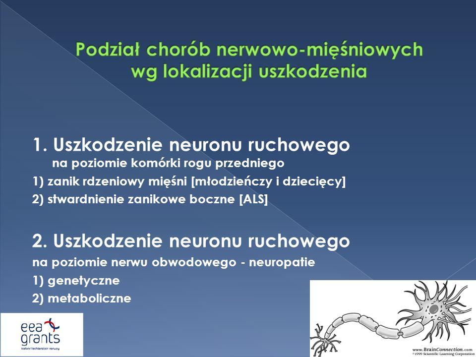 1. Uszkodzenie neuronu ruchowego na poziomie komórki rogu przedniego 1) zanik rdzeniowy mięśni [młodzieńczy i dziecięcy] 2) stwardnienie zanikowe bocz
