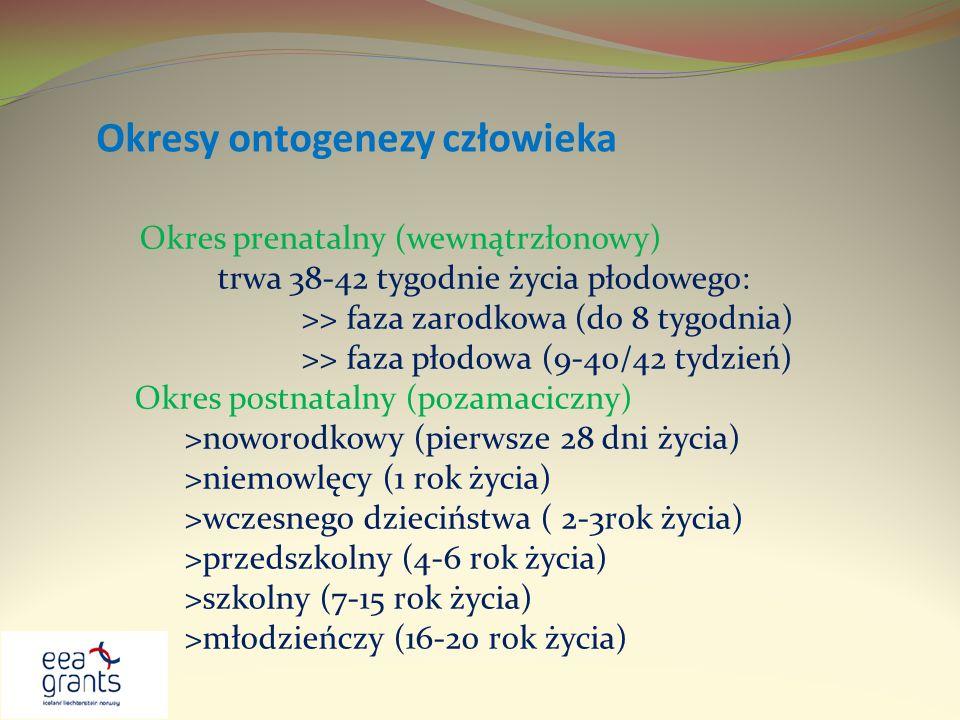 Okresy ontogenezy człowieka Okres prenatalny (wewnątrzłonowy) trwa 38-42 tygodnie życia płodowego: >> faza zarodkowa (do 8 tygodnia) >> faza płodowa (
