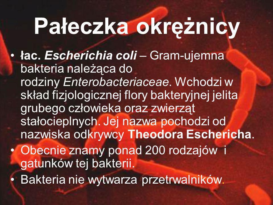 Pałeczka okrężnicy łac. Escherichia coli – Gram-ujemna bakteria należąca do rodziny Enterobacteriaceae. Wchodzi w skład fizjologicznej flory bakteryjn
