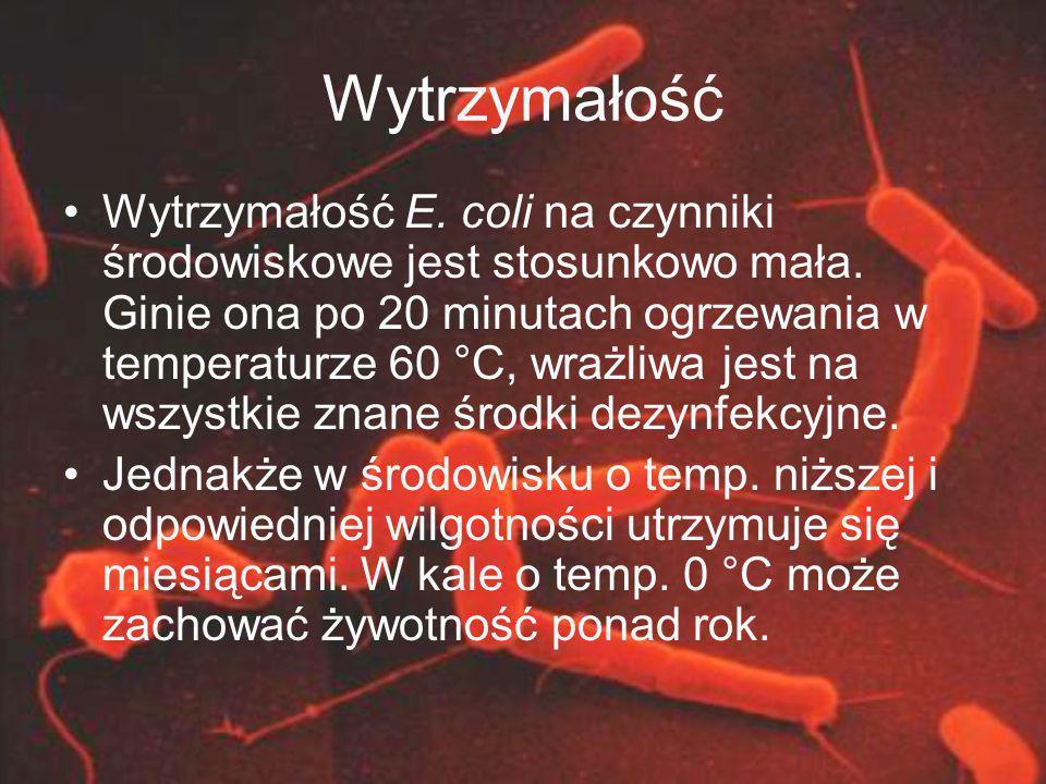 Wytrzymałość Wytrzymałość E. coli na czynniki środowiskowe jest stosunkowo mała. Ginie ona po 20 minutach ogrzewania w temperaturze 60 °C, wrażliwa je
