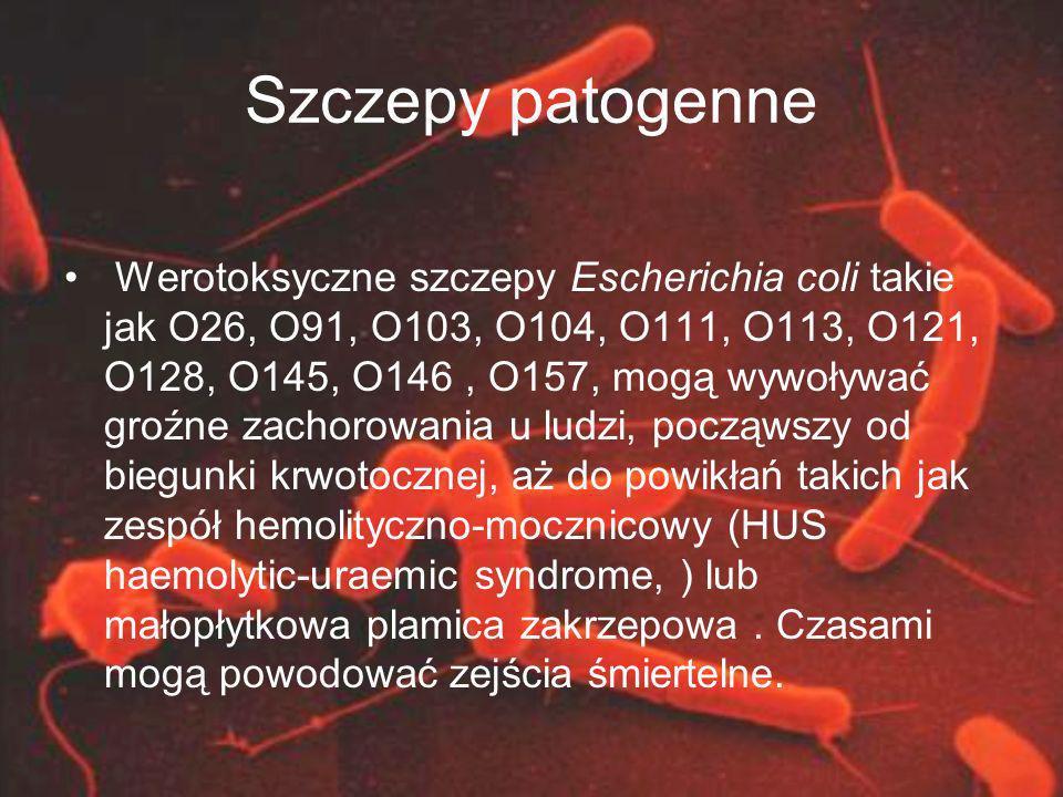 Szczepy patogenne Werotoksyczne szczepy Escherichia coli takie jak O26, O91, O103, O104, O111, O113, O121, O128, O145, O146, O157, mogą wywoływać groź