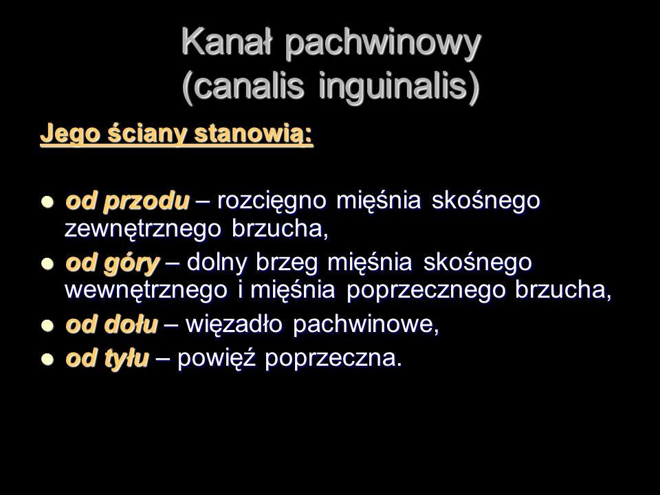 Kanał pachwinowy (canalis inguinalis) Jego ściany stanowią: od przodu – rozcięgno mięśnia skośnego zewnętrznego brzucha, od przodu – rozcięgno mięśnia