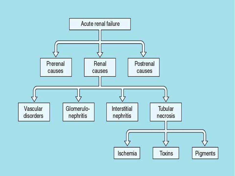 Przednerkowa ONN hipowolemia: krwawienia, wymioty, biegunka, oparzenia, diuretyki redystrybucja: hepatomegalia, z.