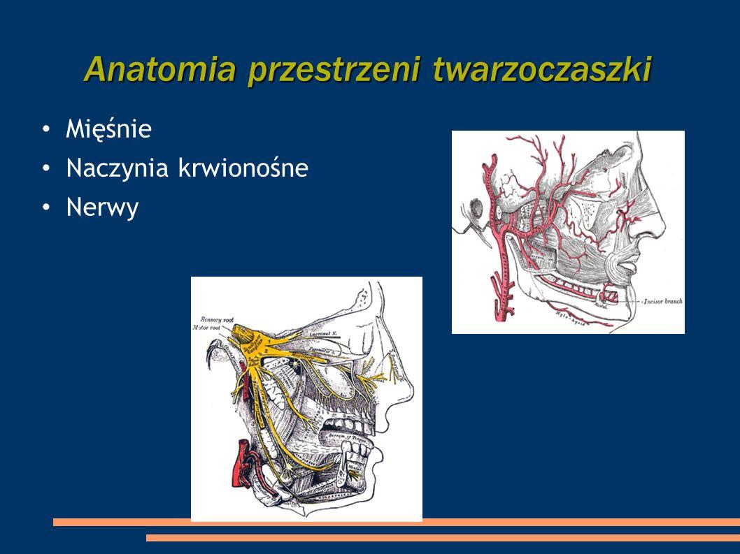 Anatomia przestrzeni twarzoczaszki Mięśnie Naczynia krwionośne Nerwy