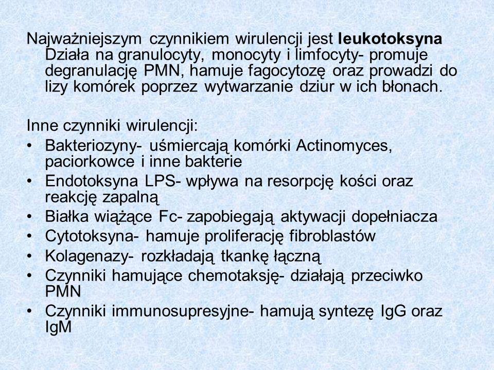 Actinobacillus actinomycetemcomitans