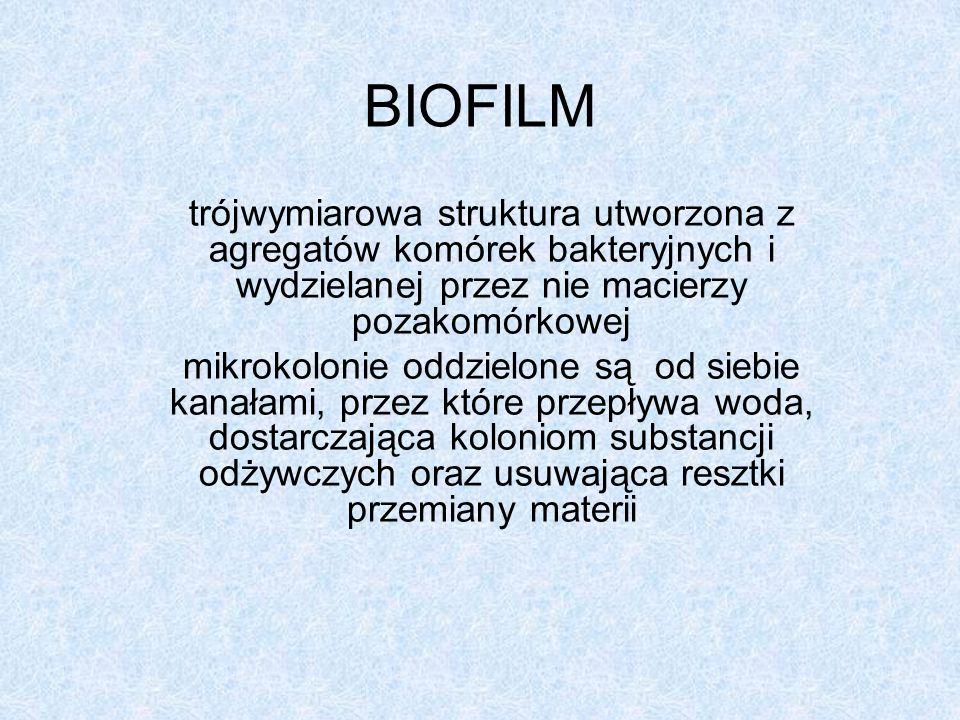 Cechy biofilmu: występuje w nim mieszanina stanów metabolicznych;