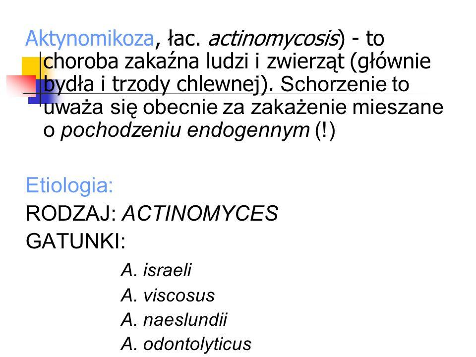 Aktynomikoza, łac. actinomycosis) - to choroba zakaźna ludzi i zwierząt (głównie bydła i trzody chlewnej). Schorzenie to uważa się obecnie za zakażeni