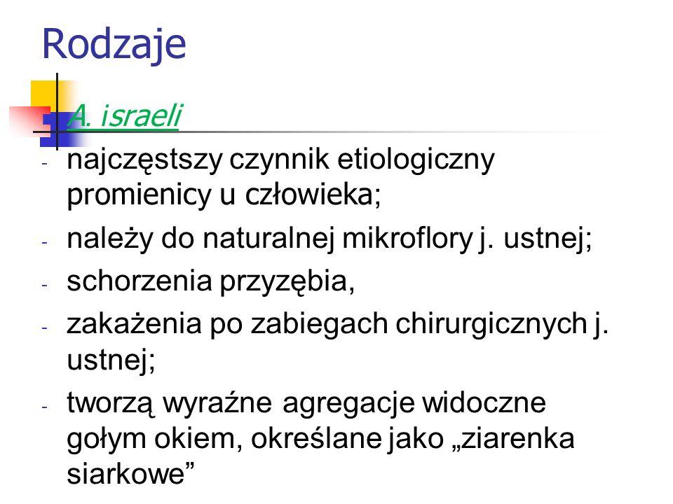 Rodzaje A. i sraeli - najczęstszy czynnik etiologiczny promienic y u człowieka ; - należy do naturalnej mikroflory j. ustnej; - schorzenia przyzębia,