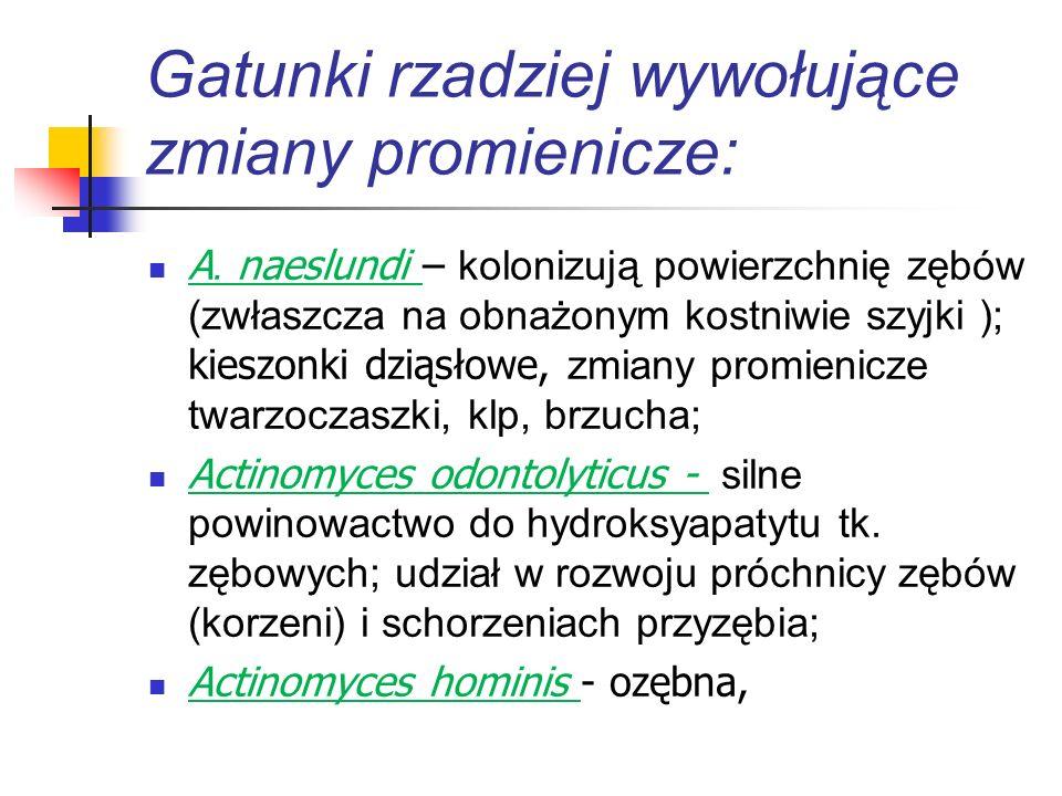 Czynniki etiologiczne promienicy c.d.: Mikroflora jamy ustnej (!) (dziąsła, płytka nazębna, migdałki), p.