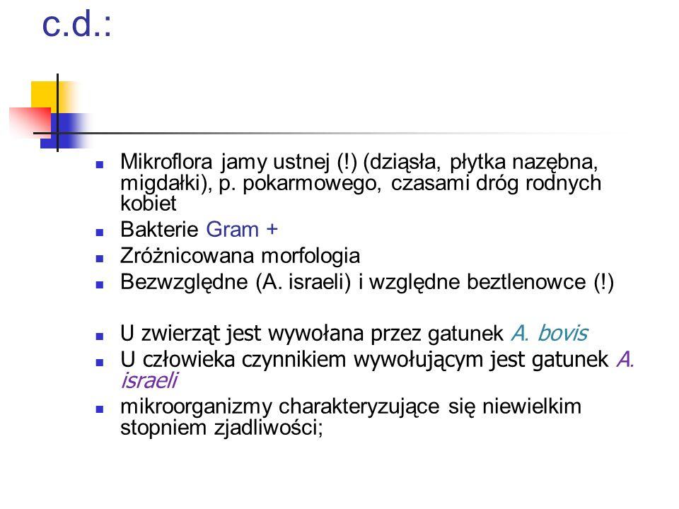 Czynniki etiologiczne promienicy c.d.: Mikroflora jamy ustnej (!) (dziąsła, płytka nazębna, migdałki), p. pokarmowego, czasami dróg rodnych kobiet Bak