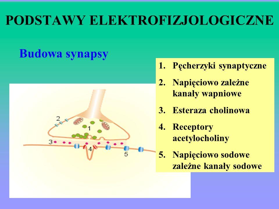 ŚRODKI BLOKUJĄCE PRZEWODNICTWO NERWOWO-MIĘŚNIOWE DZIAŁANIE: Zwiotczenie mięśni poprzecznie prążkowanych poprzez: receptory presynaptyczne płytki końco