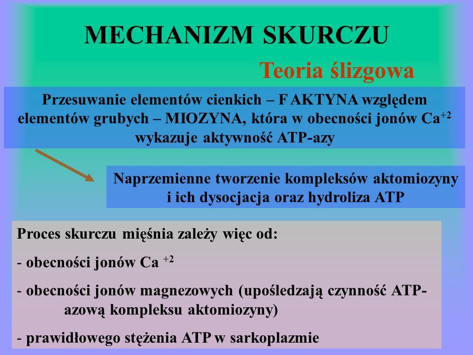 MECHANIZM SKURCZU Teoria ślizgowa Przesuwanie elementów cienkich – F AKTYNA względem elementów grubych – MIOZYNA, która w obecności jonów Ca +2 wykazuje aktywność ATP-azy Naprzemienne tworzenie kompleksów aktomiozyny i ich dysocjacja oraz hydroliza ATP Proces skurczu mięśnia zależy więc od: - obecności jonów Ca +2 - obecności jonów magnezowych (upośledzają czynność ATP- azową kompleksu aktomiozyny) - prawidłowego stężenia ATP w sarkoplazmie