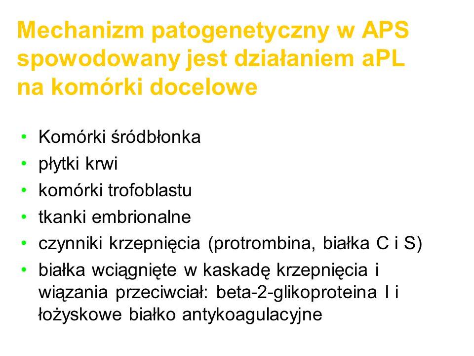 Mechanizm patogenetyczny w APS spowodowany jest działaniem aPL na komórki docelowe Komórki śródbłonka płytki krwi komórki trofoblastu tkanki embrional