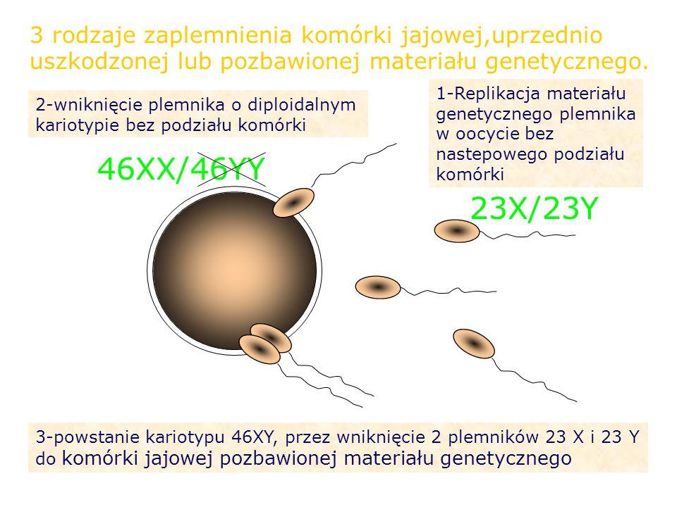 23X/23Y 46XX/46YY 3 rodzaje zaplemnienia komórki jajowej,uprzednio uszkodzonej lub pozbawionej materiału genetycznego. 1-Replikacja materiału genetycz
