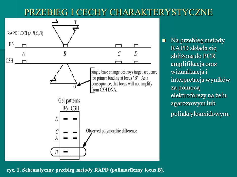 PRZEBIEG I CECHY CHARAKTERYSTYCZNE Na przebieg metody RAPD składa się zbliżona do PCR amplifikacja oraz wizualizacja i interpretacja wyników za pomocą