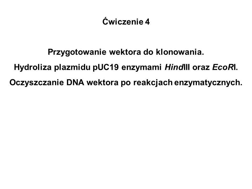 Ćwiczenie 4 Przygotowanie wektora do klonowania. Hydroliza plazmidu pUC19 enzymami HindIII oraz EcoRI. Oczyszczanie DNA wektora po reakcjach enzymatyc