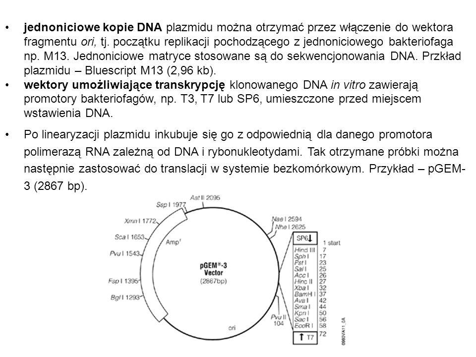 jednoniciowe kopie DNA plazmidu można otrzymać przez włączenie do wektora fragmentu ori, tj. początku replikacji pochodzącego z jednoniciowego bakteri