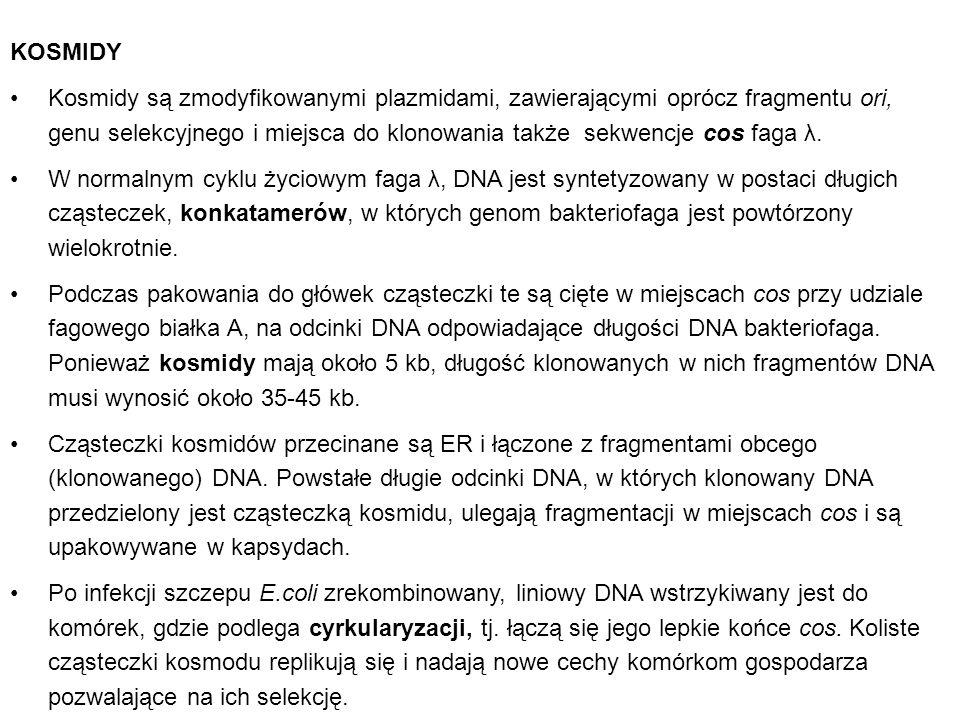 KOSMIDY Kosmidy są zmodyfikowanymi plazmidami, zawierającymi oprócz fragmentu ori, genu selekcyjnego i miejsca do klonowania także sekwencje cos faga