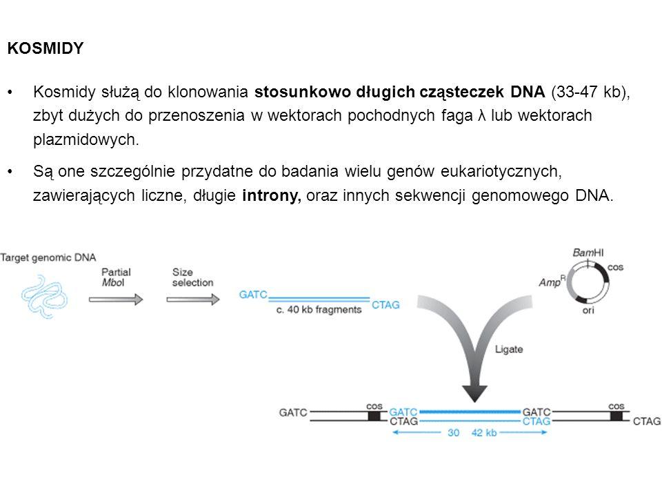 Kosmidy służą do klonowania stosunkowo długich cząsteczek DNA (33-47 kb), zbyt dużych do przenoszenia w wektorach pochodnych faga λ lub wektorach plaz