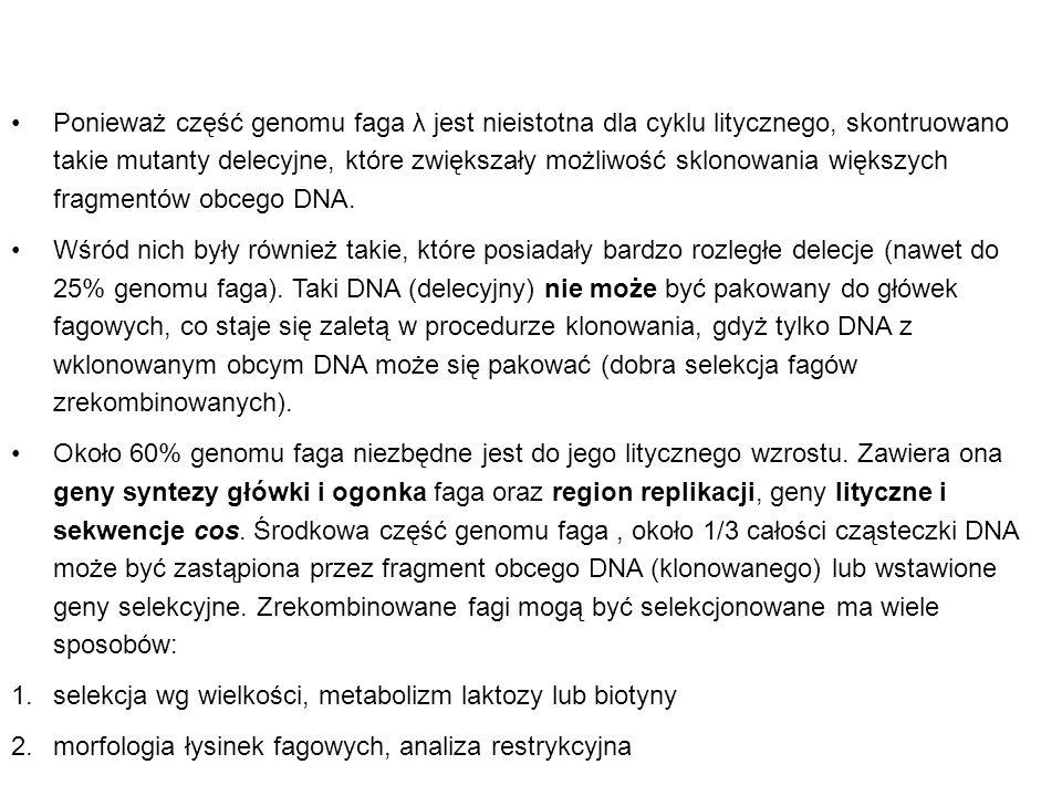Ponieważ część genomu faga λ jest nieistotna dla cyklu litycznego, skontruowano takie mutanty delecyjne, które zwiększały możliwość sklonowania większ
