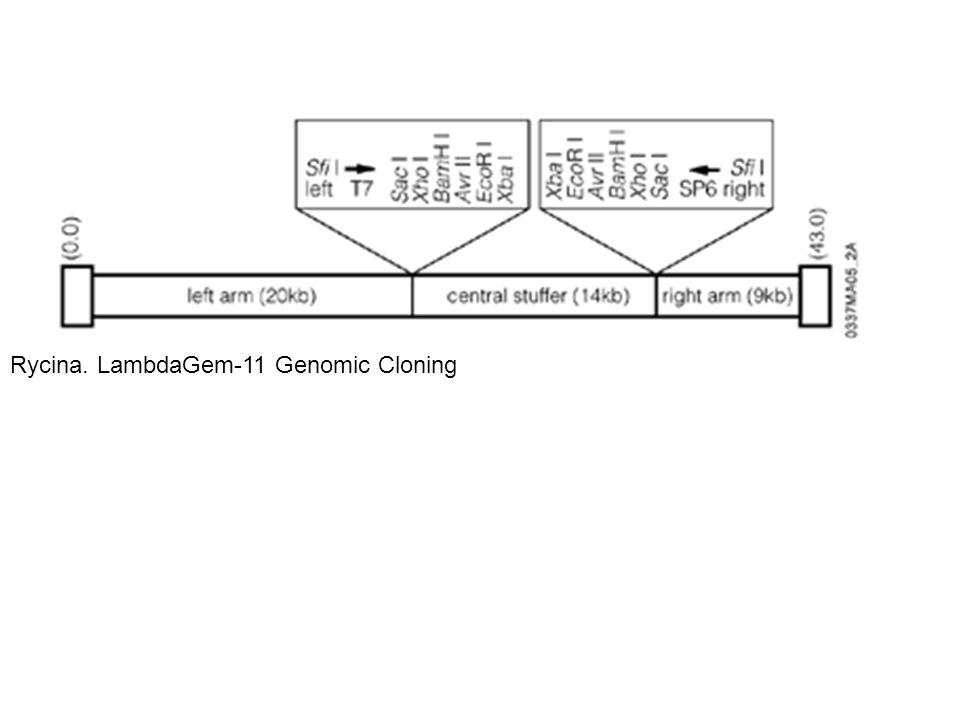 Rycina. LambdaGem-11 Genomic Cloning