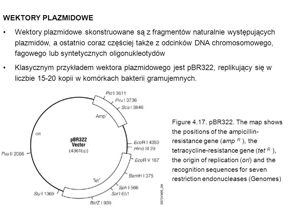 WEKTORY PLAZMIDOWE Wektory plazmidowe skonstruowane są z fragmentów naturalnie występujących plazmidów, a ostatnio coraz częściej także z odcinków DNA