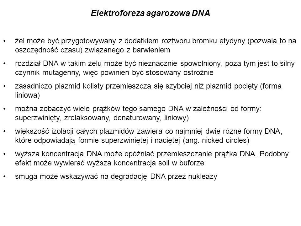 żel może być przygotowywany z dodatkiem roztworu bromku etydyny (pozwala to na oszczędność czasu) związanego z barwieniem rozdział DNA w takim żelu mo