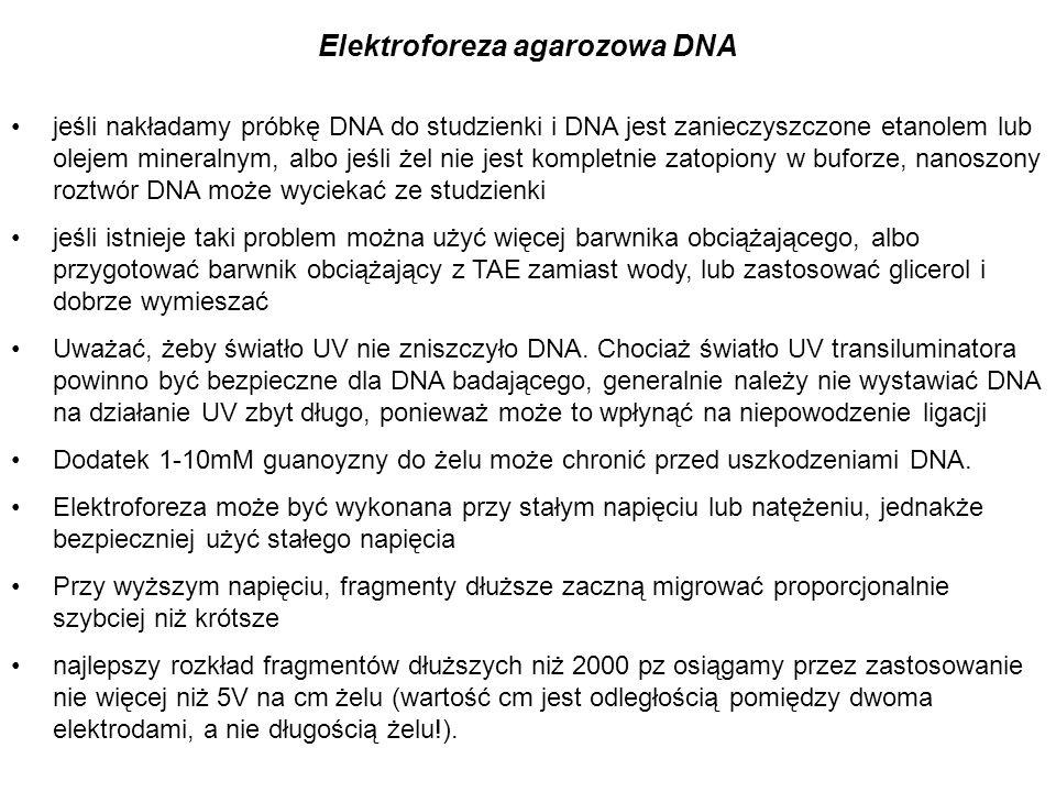 jeśli nakładamy próbkę DNA do studzienki i DNA jest zanieczyszczone etanolem lub olejem mineralnym, albo jeśli żel nie jest kompletnie zatopiony w buf