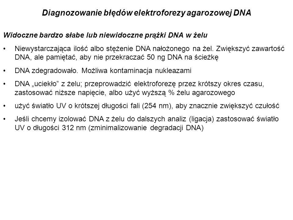 Diagnozowanie błędów elektroforezy agarozowej DNA Widoczne bardzo słabe lub niewidoczne prążki DNA w żelu Niewystarczająca ilość albo stężenie DNA nał