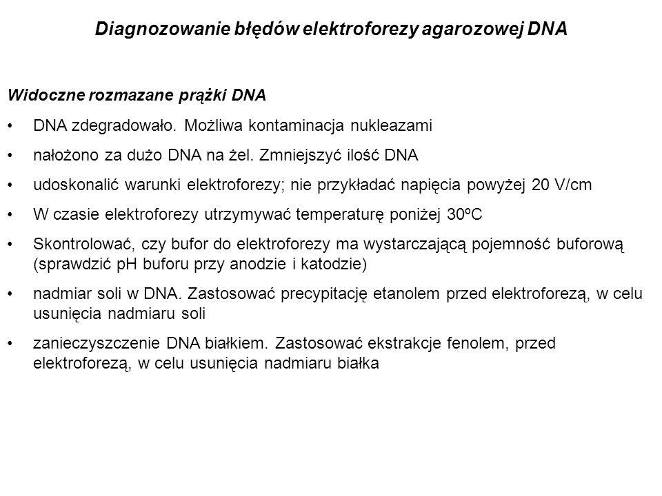 Diagnozowanie błędów elektroforezy agarozowej DNA Widoczne rozmazane prążki DNA DNA zdegradowało. Możliwa kontaminacja nukleazami nałożono za dużo DNA