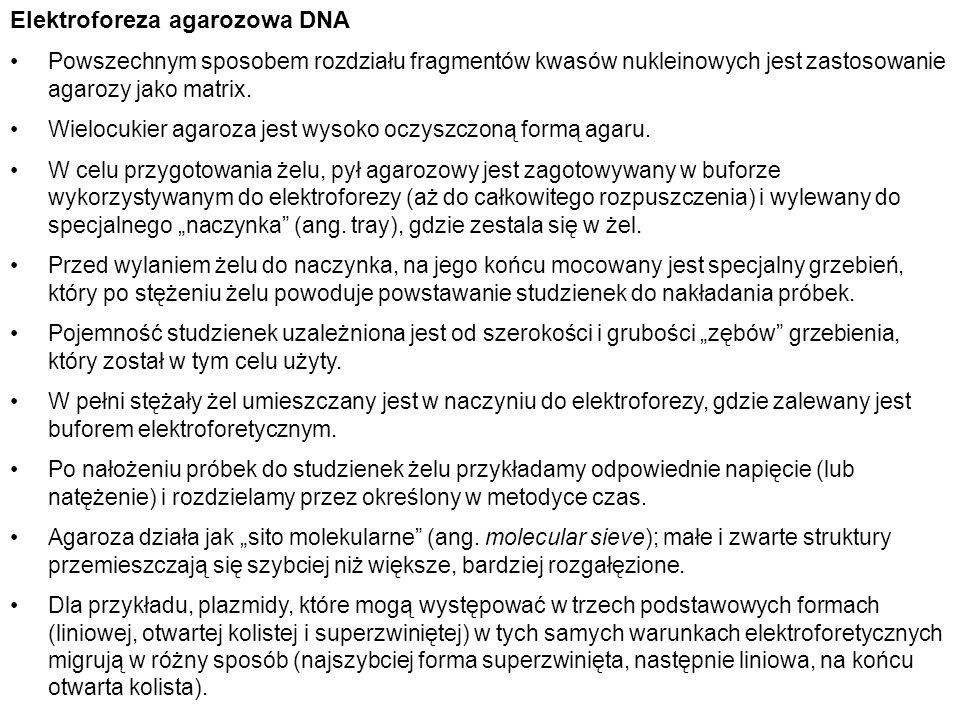 Elektroforeza agarozowa DNA Powszechnym sposobem rozdziału fragmentów kwasów nukleinowych jest zastosowanie agarozy jako matrix. Wielocukier agaroza j