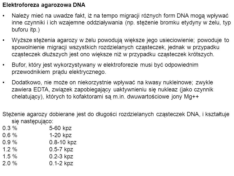Elektroforeza agarozowa DNA Należy mieć na uwadze fakt, iż na tempo migracji różnych form DNA mogą wpływać inne czynniki i ich wzajemne oddziaływania
