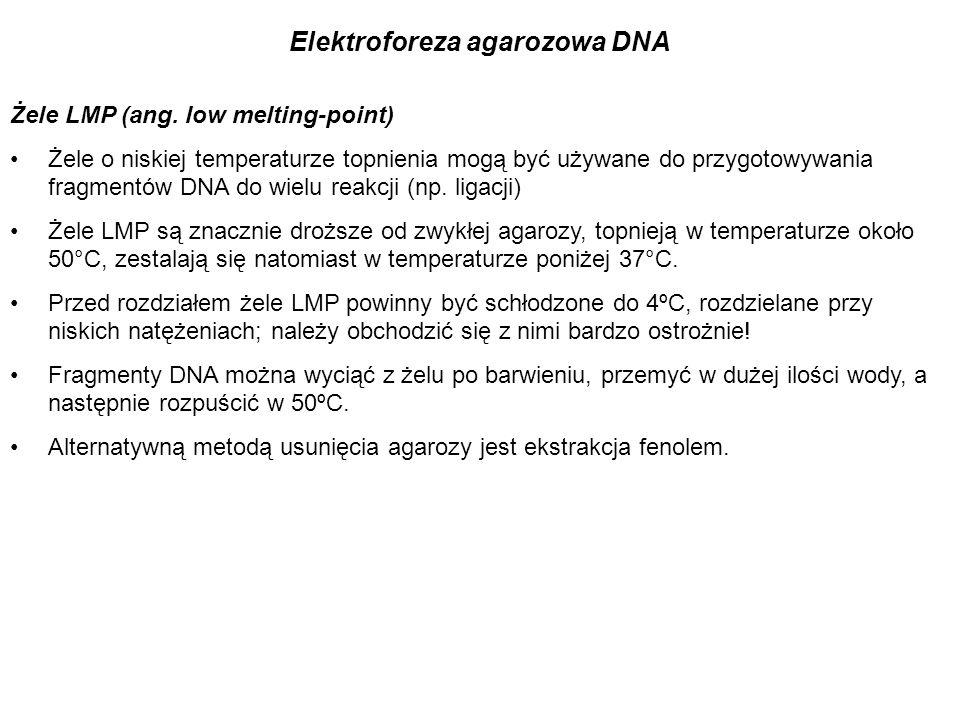 Żele LMP (ang. low melting-point) Żele o niskiej temperaturze topnienia mogą być używane do przygotowywania fragmentów DNA do wielu reakcji (np. ligac