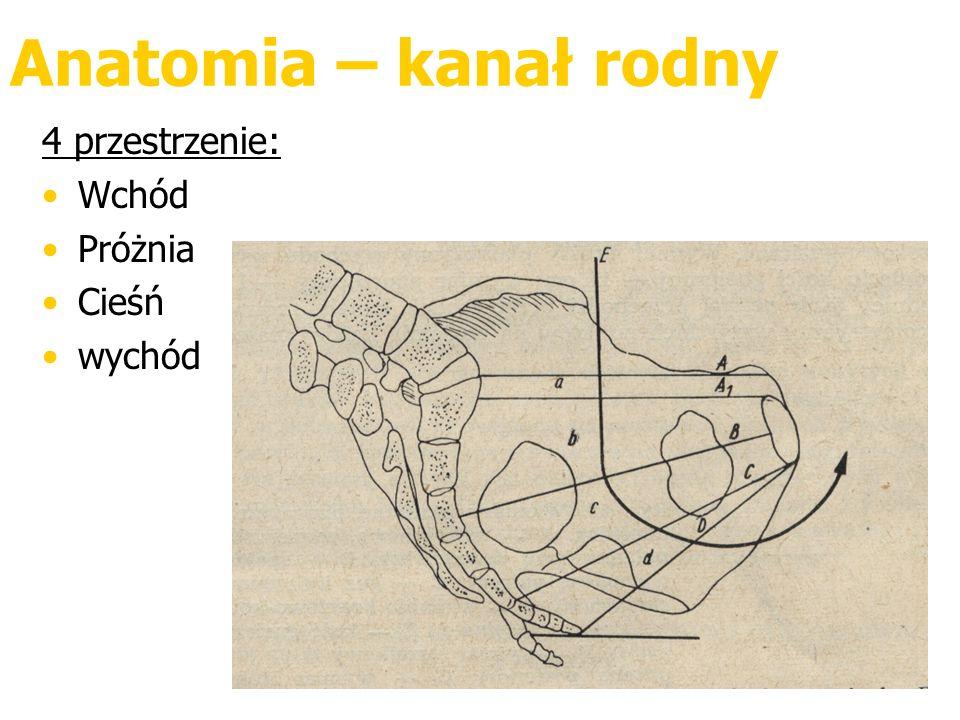 Anatomia – kanał rodny 4 przestrzenie: Wchód Próżnia Cieśń wychód