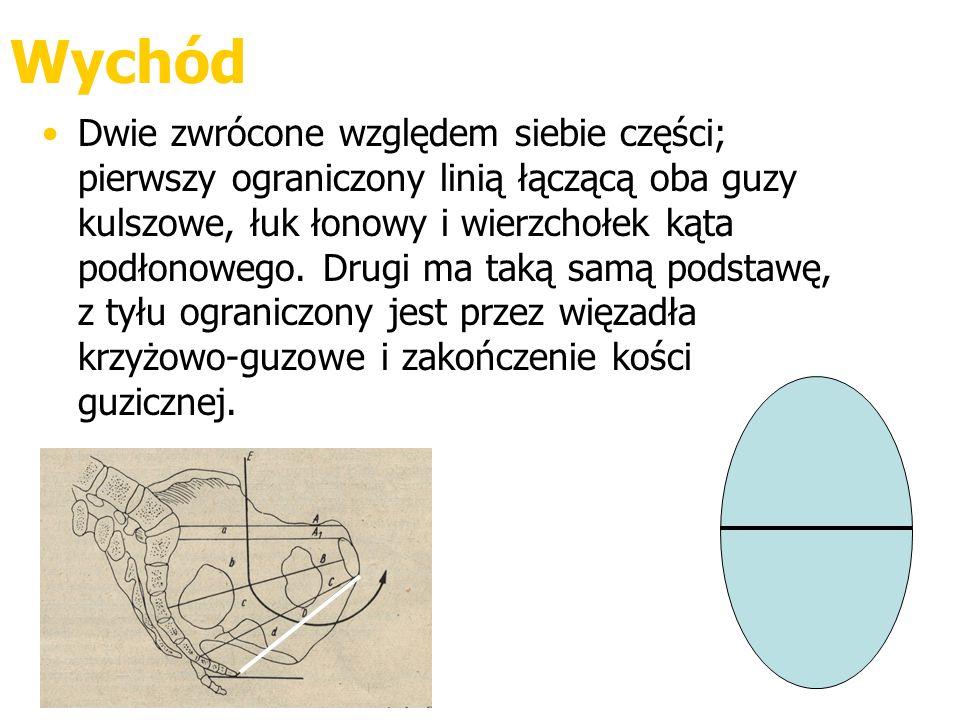 Wychód Dwie zwrócone względem siebie części; pierwszy ograniczony linią łączącą oba guzy kulszowe, łuk łonowy i wierzchołek kąta podłonowego. Drugi ma