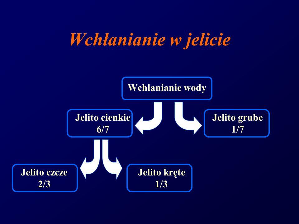 Wchłanianie w jelicie Jelito czcze 2/3 Jelito kręte 1/3 Jelito cienkie 6/7 Wchłanianie wody Jelito grube 1/7