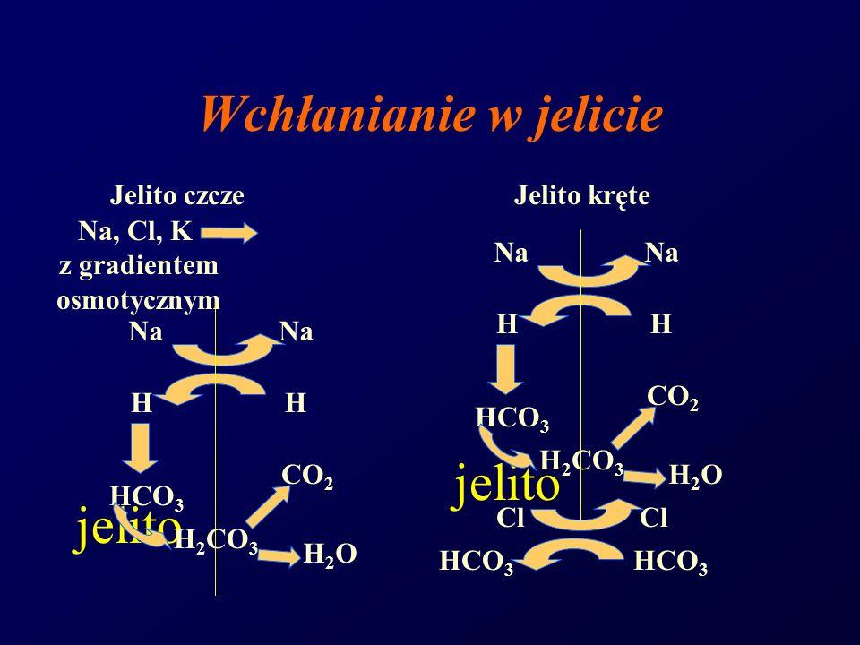 Wchłanianie w jelicie jelito Jelito czczeJelito kręte Na, Cl, K z gradientem osmotycznym Na H HCO 3 Na H CO 2 H2OH2O H 2 CO 3 Na H HCO 3 Na H CO 2 H2O