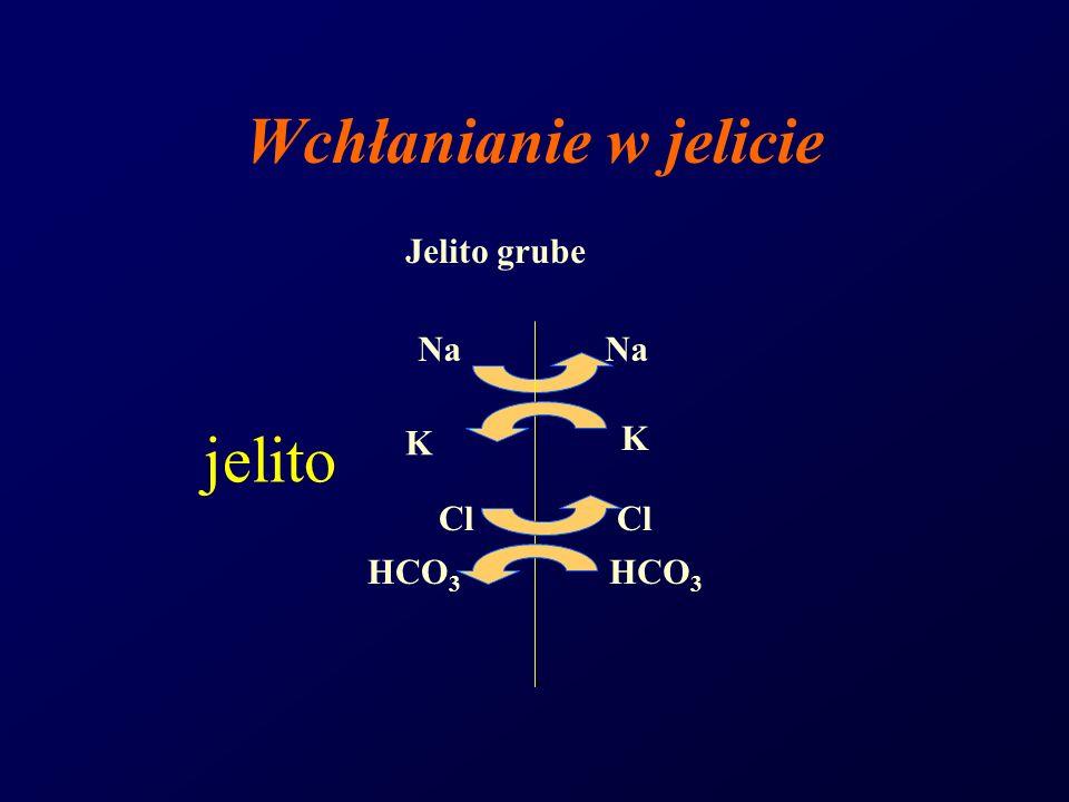 Wchłanianie w jelicie Jelito grube Na HCO 3 Cl K K jelito