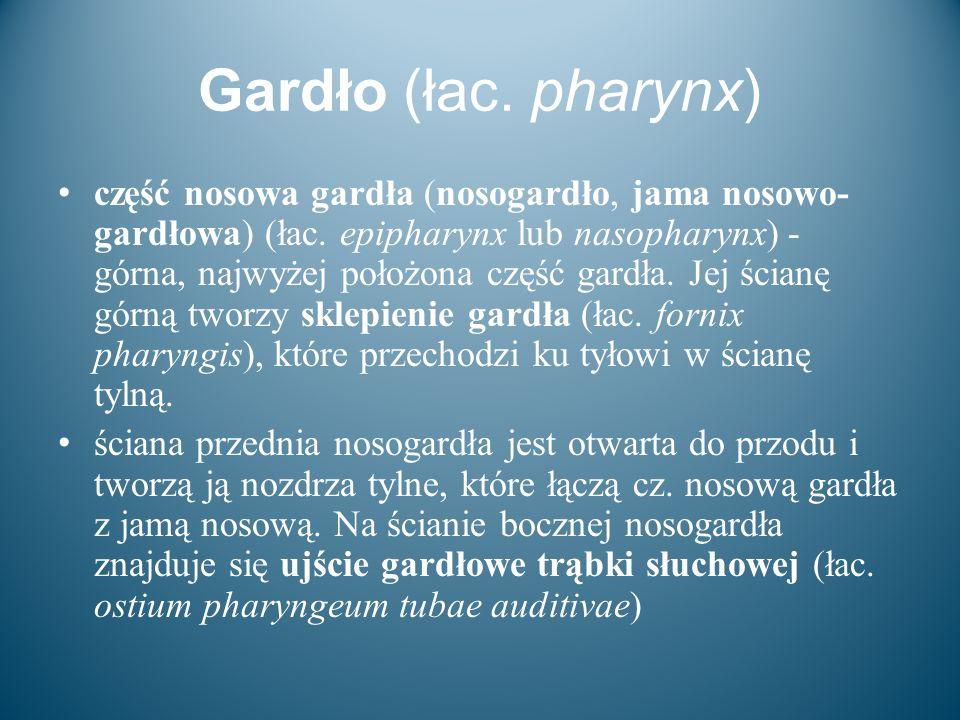 Gardło (łac. pharynx) część nosowa gardła (nosogardło, jama nosowo- gardłowa) (łac. epipharynx lub nasopharynx) - górna, najwyżej położona część gardł