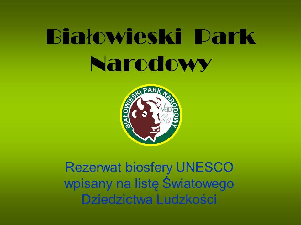 Bia ł owieski Park Narodowy Rezerwat biosfery UNESCO wpisany na listę Światowego Dziedzictwa Ludzkości