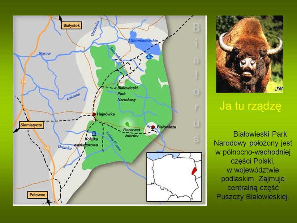 Ja tu rządzę Białowieski Park Narodowy położony jest w północno-wschodniej części Polski, w województwie podlaskim. Zajmuje centralną część Puszczy Bi