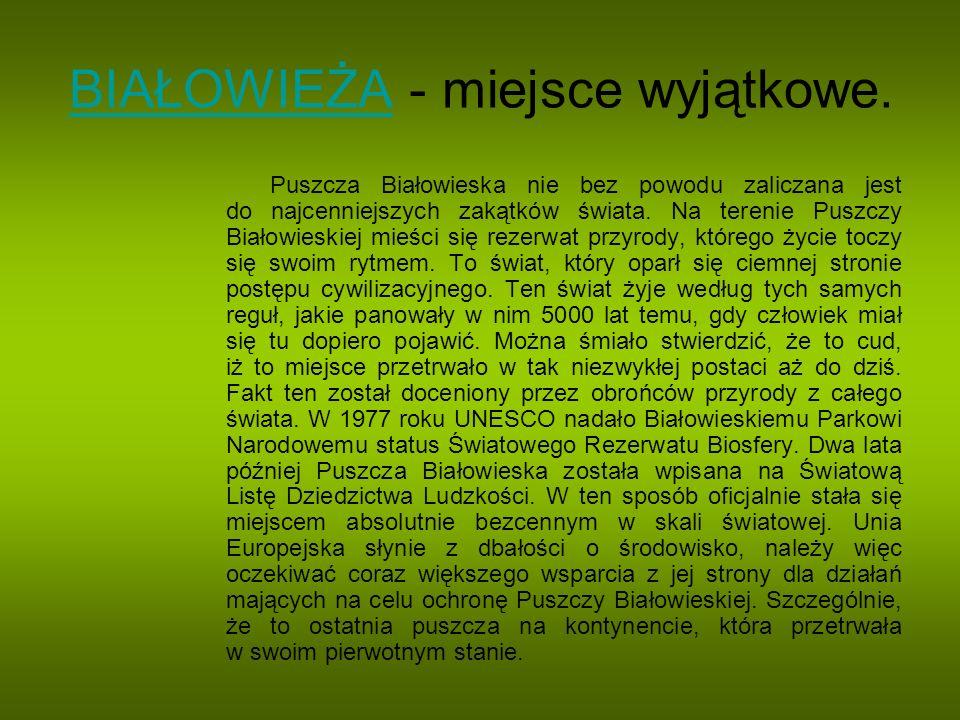 BIAŁOWIEŻABIAŁOWIEŻA - miejsce wyjątkowe. Puszcza Białowieska nie bez powodu zaliczana jest do najcenniejszych zakątków świata. Na terenie Puszczy Bia
