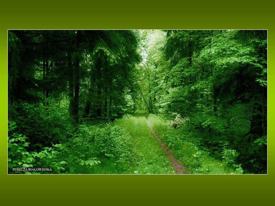 Za początki jego istnienia przyjmuje się rok 1921, kiedy na części obecnego obszaru Parku utworzono leśnictwo Rezerwat.