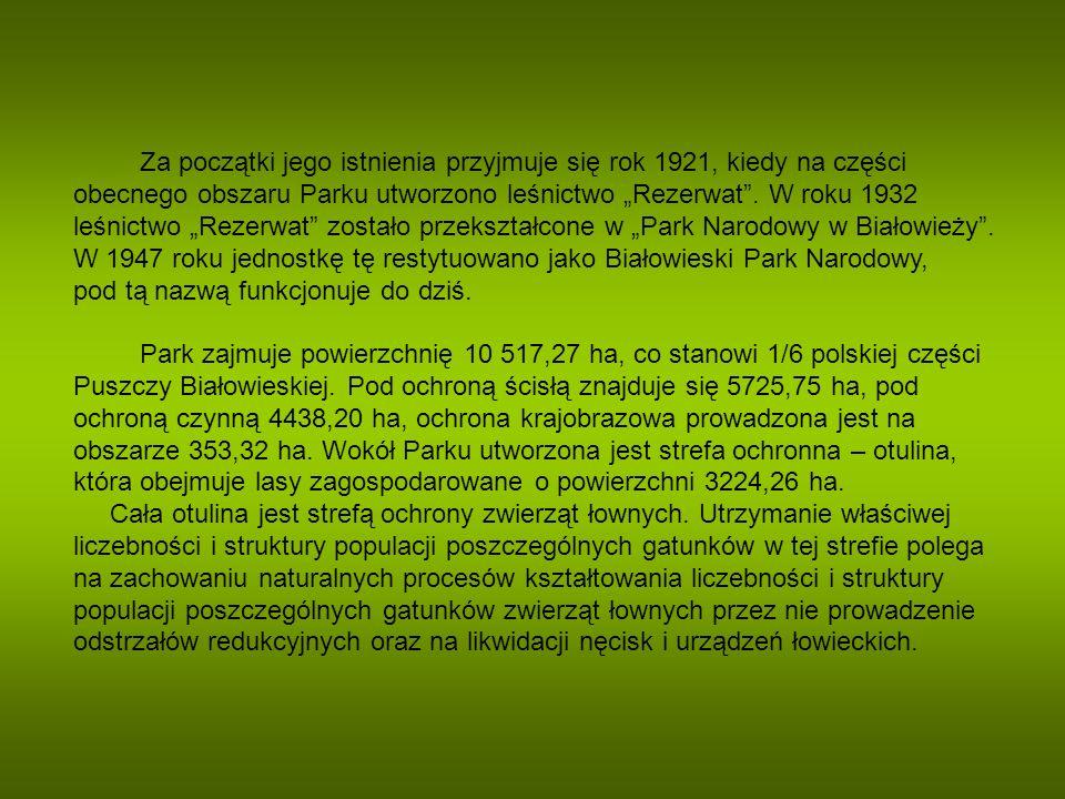 Symbolem Parku jest żubr – największy ssak lądowy Europy.