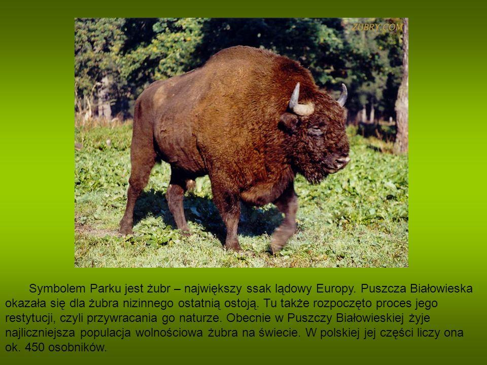 Symbolem Parku jest żubr – największy ssak lądowy Europy. Puszcza Białowieska okazała się dla żubra nizinnego ostatnią ostoją. Tu także rozpoczęto pro