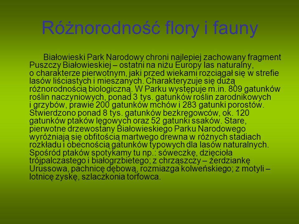 Różnorodność flory i fauny Białowieski Park Narodowy chroni najlepiej zachowany fragment Puszczy Białowieskiej – ostatni na niżu Europy las naturalny,