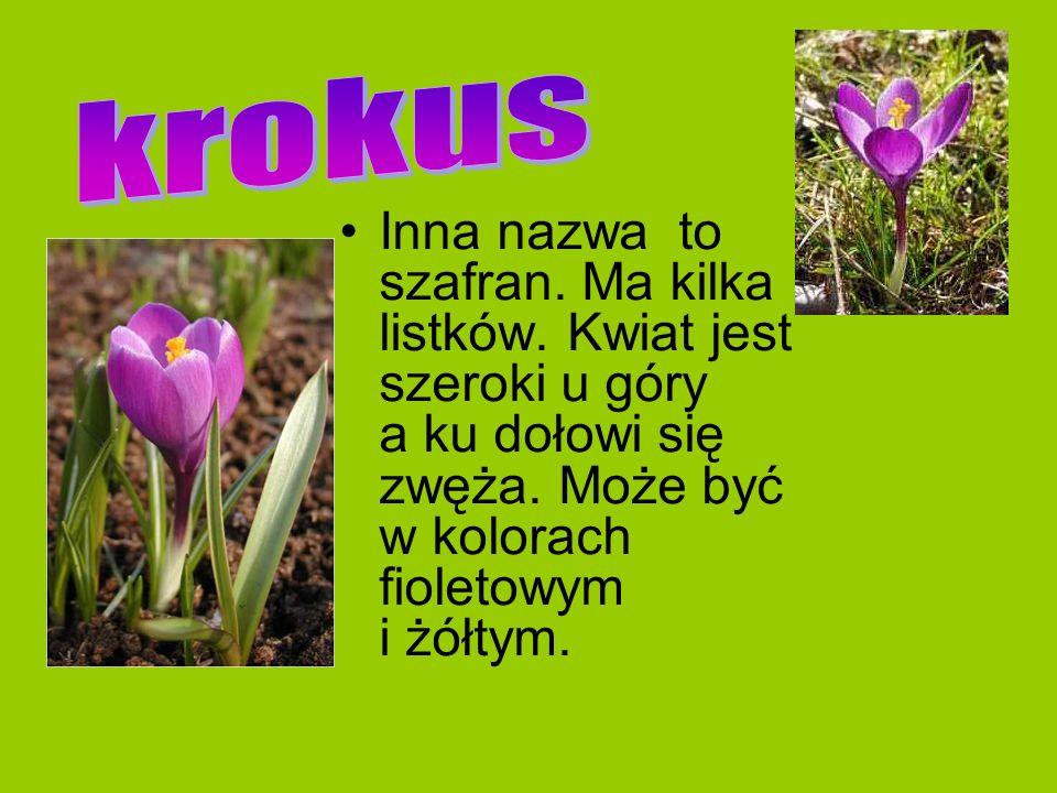 Inna nazwa to szafran. Ma kilka listków. Kwiat jest szeroki u góry a ku dołowi się zwęża. Może być w kolorach fioletowym i żółtym.