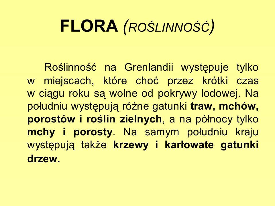 FLORA ( ROŚLINNOŚĆ ) Roślinność na Grenlandii występuje tylko w miejscach, które choć przez krótki czas w ciągu roku są wolne od pokrywy lodowej. Na p