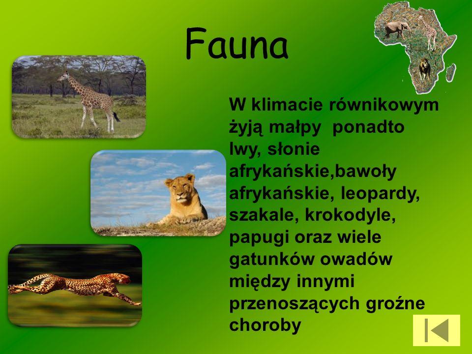 Fauna W klimacie równikowym żyją małpy ponadto lwy, słonie afrykańskie,bawoły afrykańskie, leopardy, szakale, krokodyle, papugi oraz wiele gatunków ow